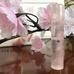 rose&aqa.jpg