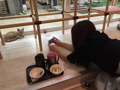 猫カフェ21.jpg