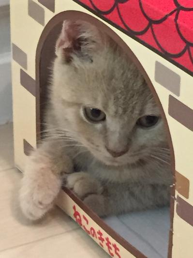 猫カフェ¥.jpg